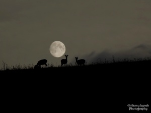 harvest-moon-deer-lynch-1024